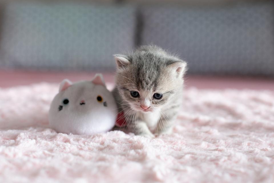 kotě a plyšák